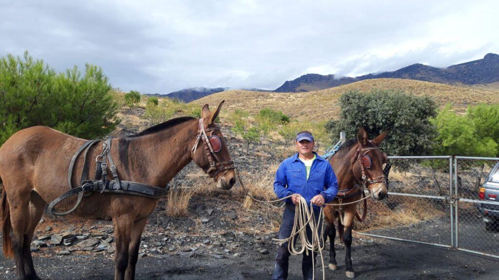 Yeguada La Dehesa colabora en una montería